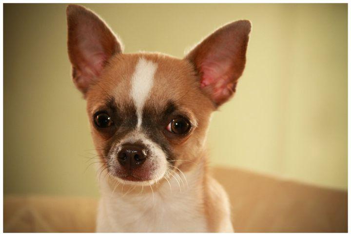 Популярные фото собак  lifedogru